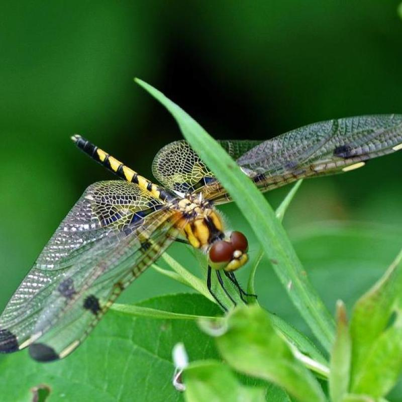 Dragonflies….
